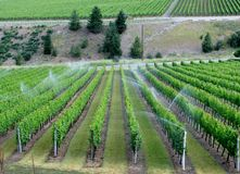 Irrigation system on a wine field Royalty Free Stock Photography
