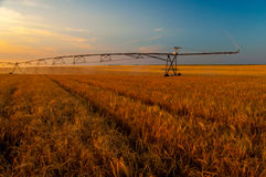 Irrigation system working on the wheat field Stock Images