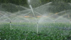 Irrigation systems in a green vegetable garden Royalty Free Stock Images