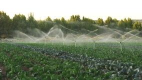 Irrigation systems in a green vegetable garden stock video