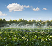 Irrigation Systems In A Vegetable Garden Royalty Free Stock Images