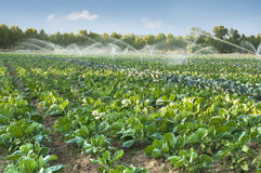 Irrigation Systems In A Vegetable Garden Royalty Free Stock Photography