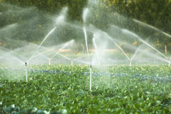Irrigation Systems In A Vegetable Garden Stock Photos