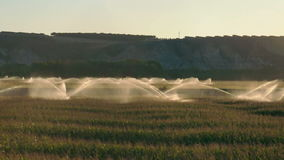 Irrigation systems on sunset. Corn plantation stock video footage