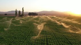 Irrigation systems are working in agricultural field at sunset. Aerial shot. Drone, Mavic pro. Water system. Slow motion.