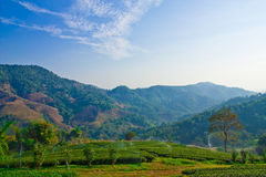 Irrigation in tea garden, north of Thailand Royalty Free Stock Photos