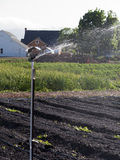Irrigation at the vegetable farm Royalty Free Stock Photos