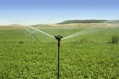 Irrigation vegetables field with sprinkler royalty free stock photography