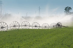 Irrigation of vegetables Stock Photos