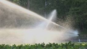 Irrigation of vegetables stock video