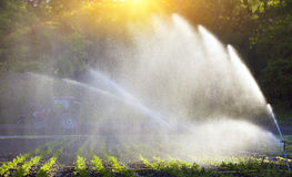 Irrigation of vegetables into the sunset Royalty Free Stock Photography