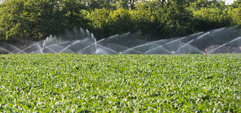 Irrigation of vegetables Stock Photography
