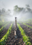 Irrigation of vegetables Royalty Free Stock Photos
