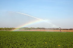 Irrigation on a wheat field Stock Photo