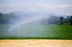 Irrigation on a wheat field Stock Photos