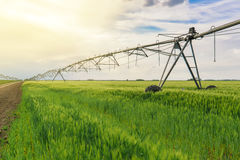 Irrigation in wheat field Stock Image