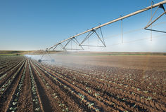 Irrigation Wheel Line. In field Royalty Free Stock Image