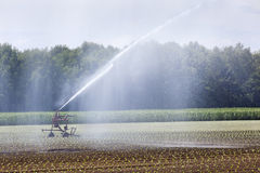 Irrigation of young crops Royalty Free Stock Photo