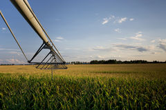 Irrigator Above Corn Field, Midwest, USA Royalty Free Stock Photos