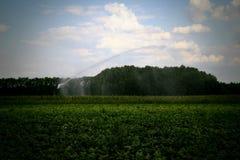 Irrigator di viaggio con il campo d'innaffiatura di agricoltura dello spruzzatore Fotografie Stock