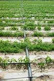 Irrigazione agricola Fotografia Stock Libera da Diritti