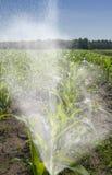 Irrigazione al campo Immagine Stock