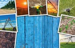 Irrigazione in collage della foto di agricoltura Immagine Stock