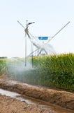 Irrigazione concentrare del perno di un campo di mais Immagine Stock Libera da Diritti