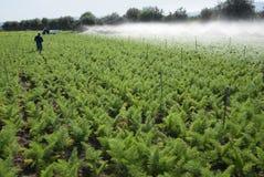 Irrigazione del campo Fotografie Stock Libere da Diritti