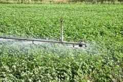 Irrigazione del campo del cotone Immagine Stock