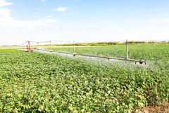Irrigazione del campo del cotone Immagine Stock Libera da Diritti