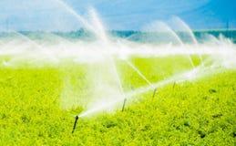 Irrigazione del campo dell'azienda agricola Fotografie Stock