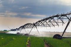 Irrigazione del campo della cipolla Fotografia Stock