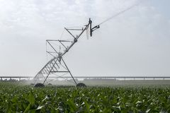 Irrigazione del campo di cereale Fotografie Stock