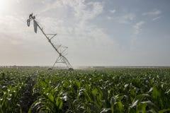 Irrigazione del campo di cereale Fotografia Stock