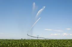 Irrigazione del campo di cereale Immagine Stock Libera da Diritti