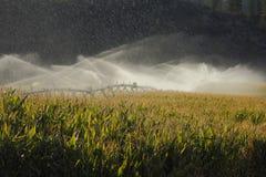 Irrigazione del campo di cereale della valle di Okanagan Fotografia Stock
