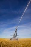 Irrigazione del campo di frumento Fotografia Stock