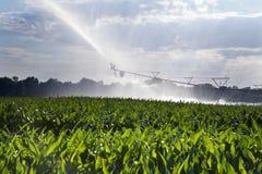 Irrigazione del campo di mais Fotografia Stock