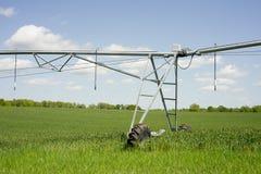 Irrigazione del grano fotografia stock