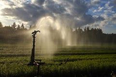 Irrigazione del raccolto con un idrante Fotografia Stock Libera da Diritti