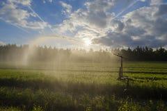 Irrigazione del raccolto con un idrante Fotografia Stock