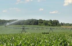 Irrigazione del raccolto del cereale Fotografie Stock Libere da Diritti