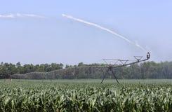 Irrigazione del raccolto del cereale Fotografia Stock