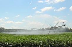 Irrigazione del raccolto della soia Immagine Stock