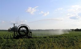 Irrigazione delle patate Immagine Stock