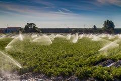 irrigazione di terreno coltivabile nella campagna nel Nord dell'Italia Fotografia Stock Libera da Diritti