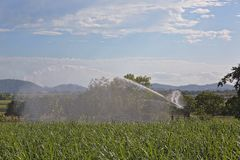 Irrigazione di un australiano Sugar Cane Crop fotografia stock libera da diritti