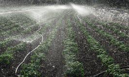 Irrigazione di verdure nella campagna di Monopoli - Puglia Puglia immagini stock libere da diritti