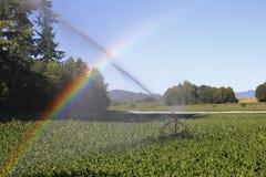 Irrigazione ed arcobaleno Fotografia Stock